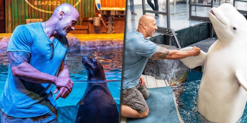 Animal rights supporters criticize Dwayne Johnson for aquarium trip